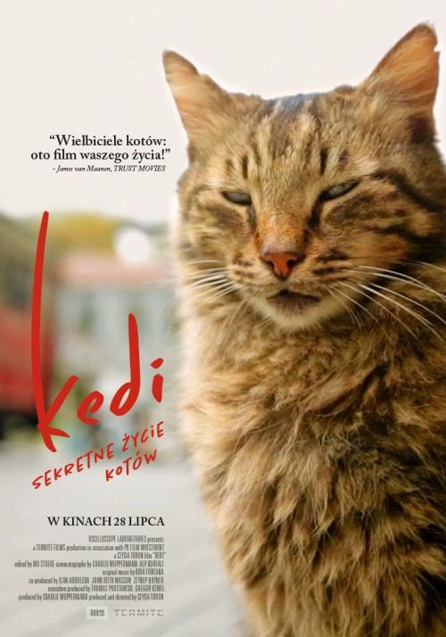 Kedi-sekretne życie kotów